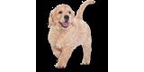 Товары для собак