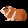 Товары для грызунов