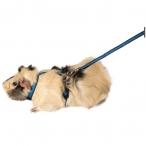 """Комплект шлейка и поводок для морской свинки из капрона """"Прогулка"""", 10*1200мм"""