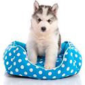 Товары для собак - Лежанки и коврики