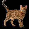 Товары для кошек