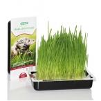 TiTBiT Трава для кошек, 0,04 кг